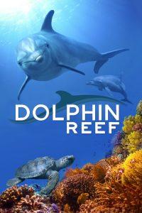 مشاهدة فيلم Dolphin Reef 2020 مترجم
