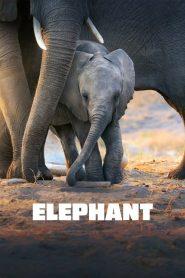 مشاهدة فيلم Elephant 2020 مترجم